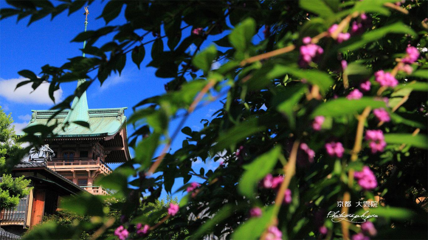 ねねの道 ムラサキシキブ越しの祇園閣 壁紙