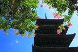 サルスベリと東寺五重塔