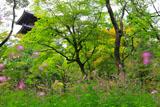 萩と仁和寺五重塔