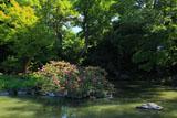 京都御苑九條池のサルスベリ