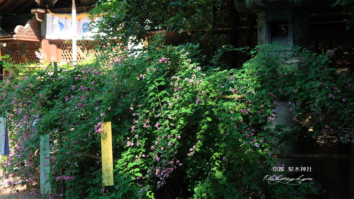 梨木神社 ハギと本殿 壁紙