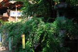 梨木神社 ハギと本殿