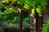 京都金蔵寺開山堂のハギ