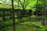 妙心寺桂春院 裏庭の杉苔