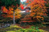 京都 常照皇寺の紅葉の勅使門と碧譚池