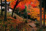 散紅葉と常照皇寺勅使門