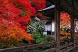京都 常照皇寺の紅葉と山茶花