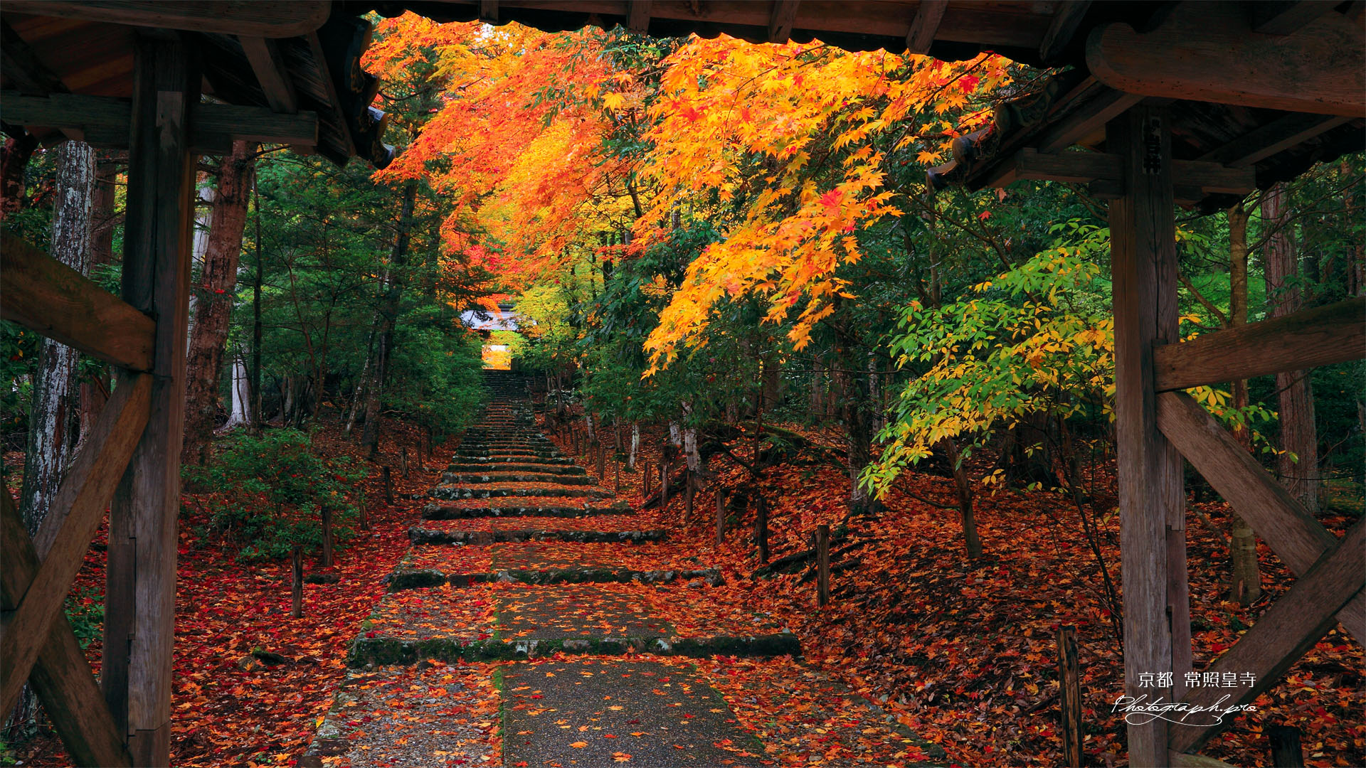 常照皇寺山門越しの紅葉の壁紙 ...