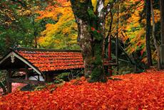 山国護国神社