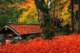 山国護国神社 敷き紅葉
