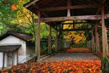 山国護国神社の紅葉