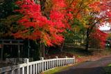 京北 井戸町春日神社の紅葉
