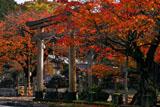 京北 黒田町春日神社の紅葉