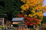 京都花脊 八桝町の紅葉