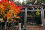 京都久多 志古淵神社の紅葉