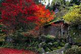 京都久多 紅葉のかやぶき民家