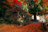 敷紅葉の峰定寺境内