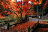 京都 峰定寺の木橋の敷紅葉