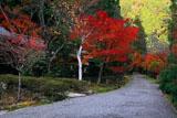 京都花脊 峰定寺参道の紅葉