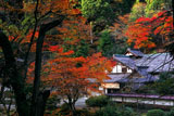 京都 紅葉の峰定寺本坊