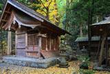 京都 花背神社の公孫樹黄葉