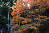 道風神社 紅葉と鳥居