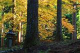 道風神社 北山杉と紅葉