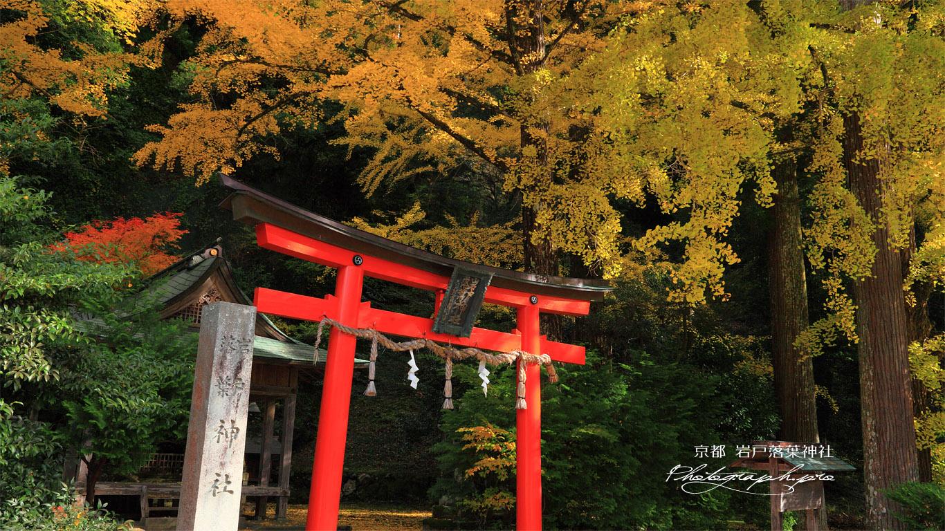 岩戸落葉神社 木漏れ日射す鳥居扁額 壁紙