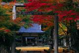 多治神社 紅葉の境内
