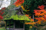多治神社 絵馬堂と紅葉
