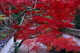 亀岡神蔵寺本堂前から紅葉越しの境内