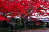 亀岡神蔵寺の紅葉と納経宝印処