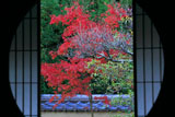 泉涌寺雲龍院 悟りの窓越しの紅葉