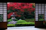 泉涌寺雲龍院 書院から庭園の紅葉