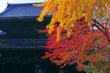 東本願寺 紅葉と御影堂門