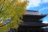 東本願寺 イチョウ黄葉と御影堂門