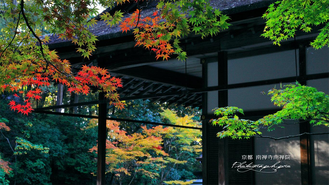 南禅寺南禅院 初紅葉と方丈 壁紙