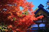 大原寺宝泉院 紅葉と書院