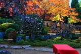 実光院 旧理覚院庭園の不断桜と紅葉