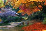 実光院 旧理覚院庭園の紅葉と不断桜