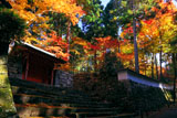 三千院朱雀門と紅葉