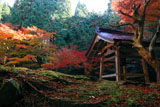 大原寺来迎院 鐘楼と紅葉