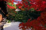京都金福寺 紅葉越しの庭園