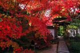 京都金福寺 紅葉と中門
