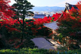 京都金福寺 本堂と紅葉