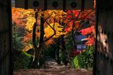 寂光院 山門越しの紅葉