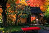 寂光院 山門と紅葉