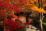 寂光院 紅葉越しの山門