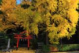 岩戸落葉神社 イチョウの黄葉