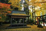 岩戸落葉神社の落葉